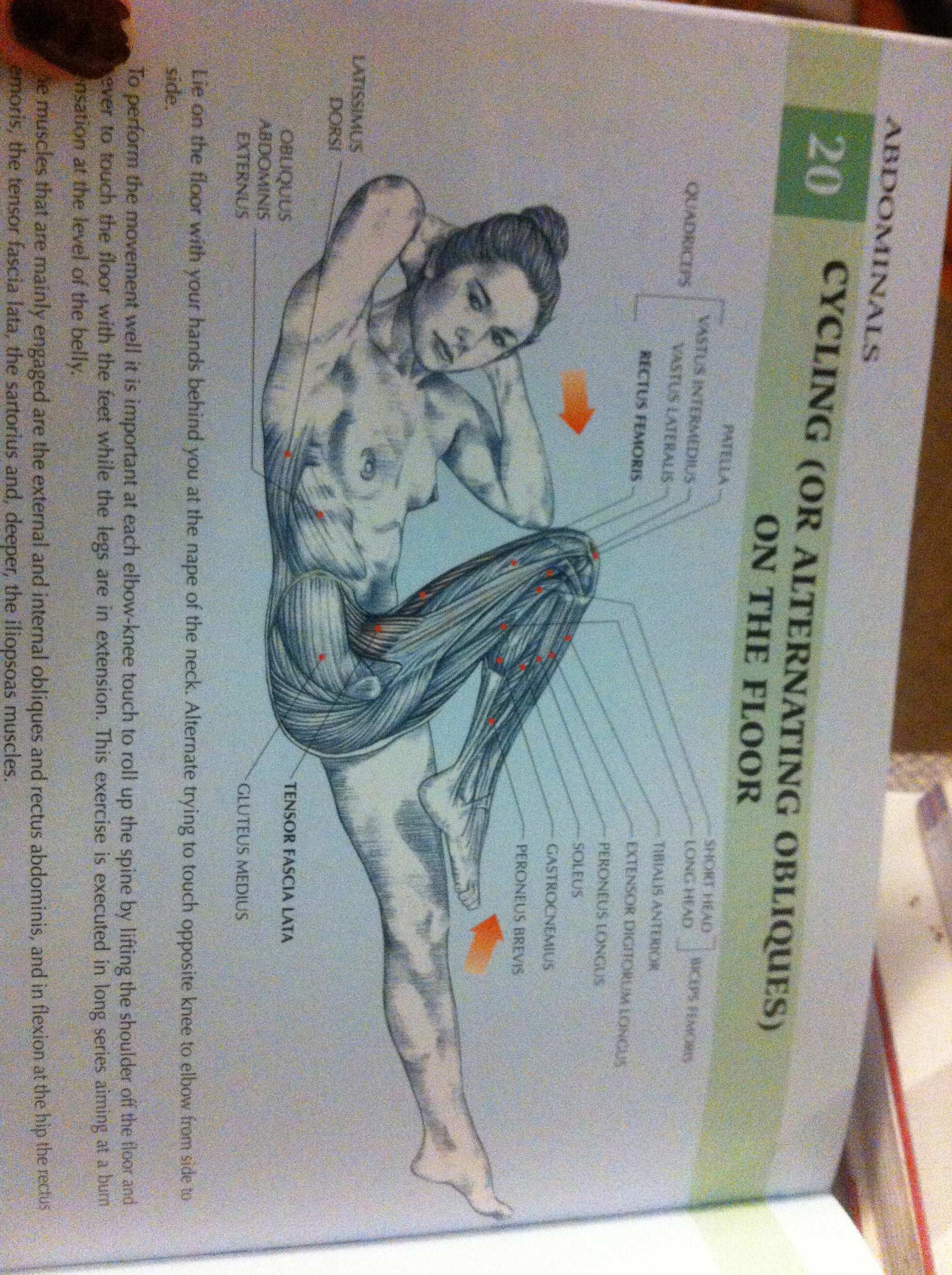 women\'s strength training anatomy   her name was cassandra