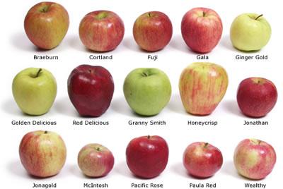 apples-trees-variety-US